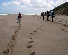 Great Ocean Road Walk Tour
