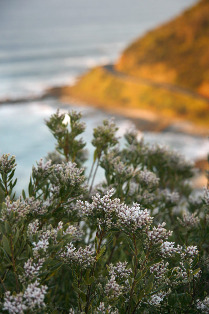 Great Ocean Walk Flora